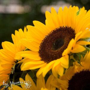 Armful Sunflowers
