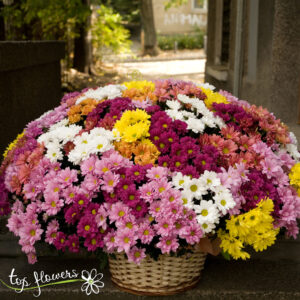 Basket of 101 chrysanthemums