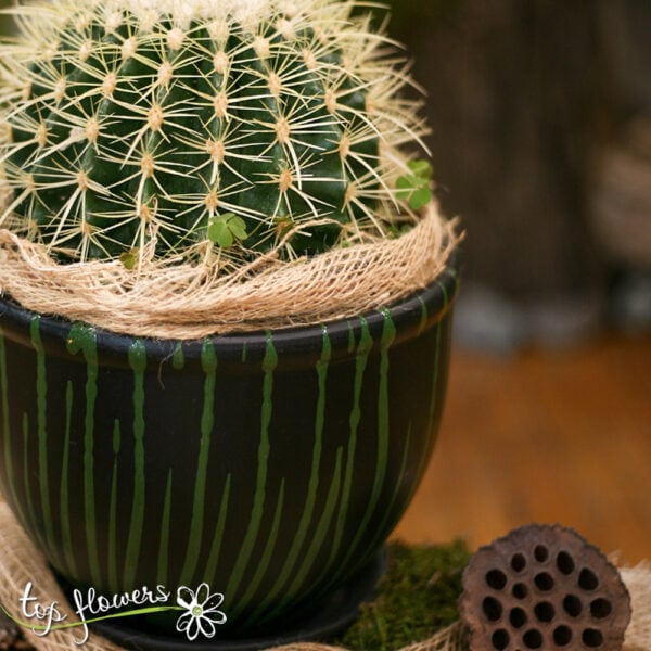 """Cactus """"Mother in Law stool"""""""