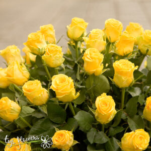 Basket of 51 yellow roses