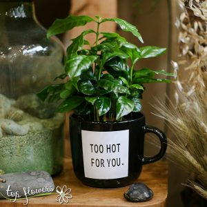 Decorative coffee