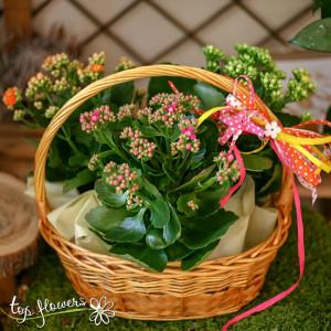 Basket with Kalanchoe