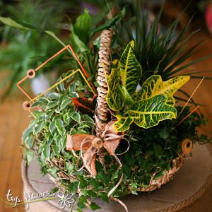 Mix leaf-decorative plants