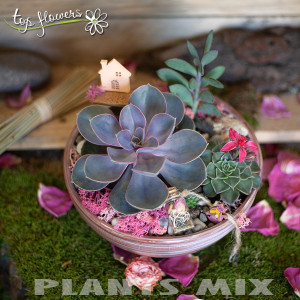 Plant MIX | 2