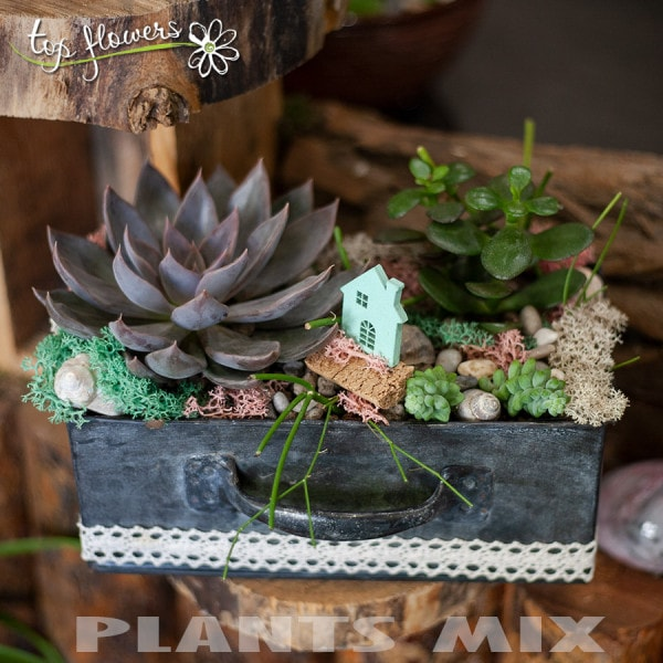 Plant mix 4