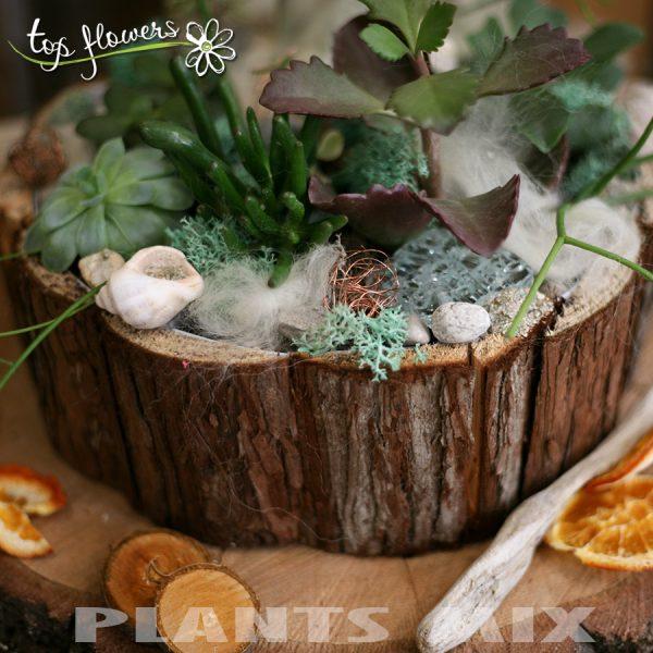 Plant mix 3