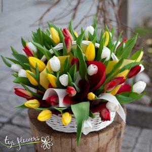 Bascet 51 tulips