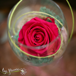 Eternal rose in a glass DARK PINK