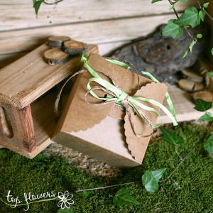 zelena kutiyka orhideya 1