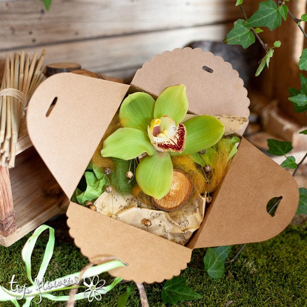 zelena kutiyka orhideya 2