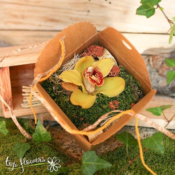 zhalta kutiyka orhideya 2