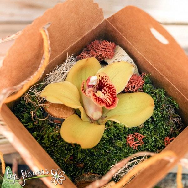 zhalta kutiyka orhideya 3