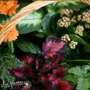 Basket of live plants | Large