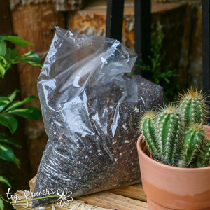 Soil 2 l. Gamma / soil for cacti and succulents /