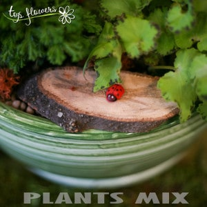 Plant MIX 7