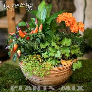 Plant MIX 8